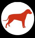 Seminare für Hundehalter