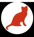 Sachkunde Katzenhaltung